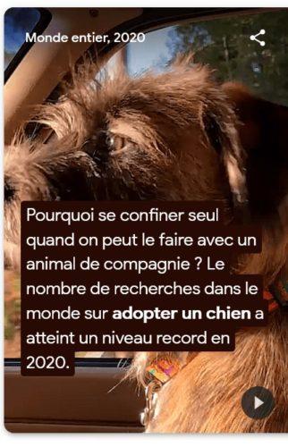 Recherche sur adopter un chien en 2020